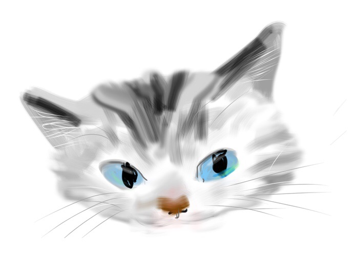 Kitten20150125.jpg