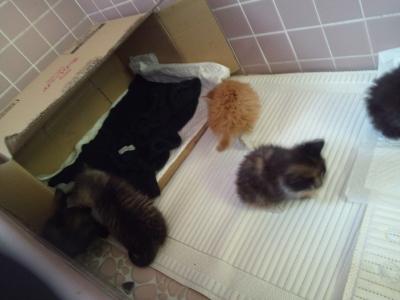 5cats1.jpg