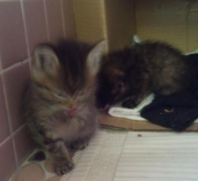 5cats2.jpg