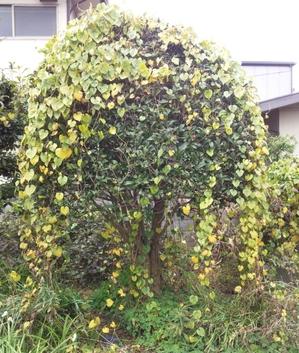 tree201501311.jpg