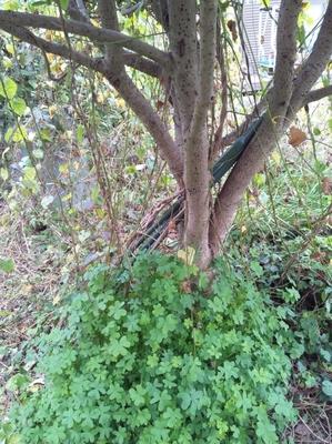 tree201501312.jpg