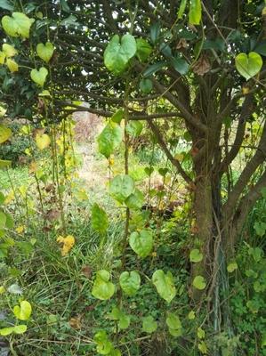 tree201501313.jpg