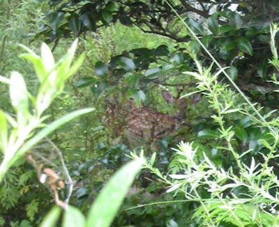 banbiforest.jpg