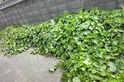 hasunoha201208.jpg
