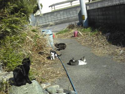 peacecats.jpg
