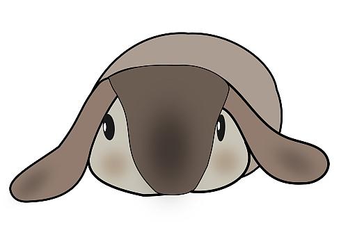 rabbit12b.jpg