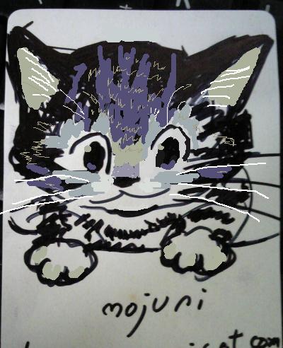 shefcat.jpg
