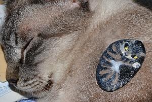 stonecat7a.jpg